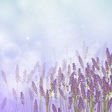 Vector Illustration of a Lavender Background  Kwiaty Fototapeta