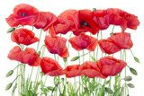 Red  poppies border Fototapety Maki Fototapeta