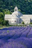 Senanque abbey with lavender field, Provence, France Prowansja Fototapeta