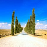 Tuscany, Cypress Trees white road rural landscape, Italy, Europe Fototapety do Kawiarni Fototapeta