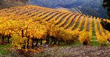 Vineyard Landscape in autumn Prowansja Fototapeta