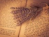 Lavender resting on an open book Sepia Fototapeta