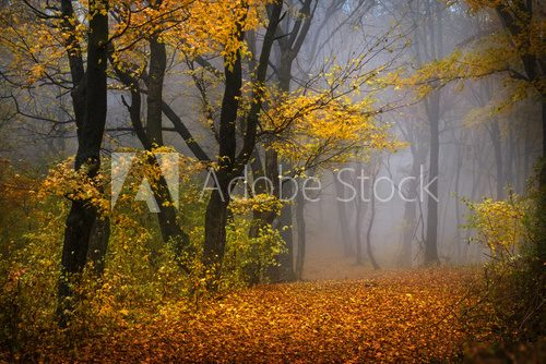 Fairytale foggy forest for child and fantasy books  Las Fototapeta