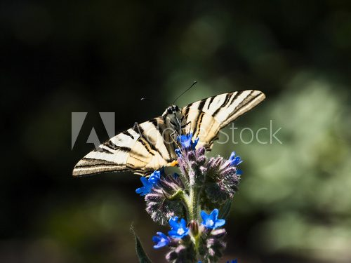 Butterfly on a flower  Motyle Fototapeta