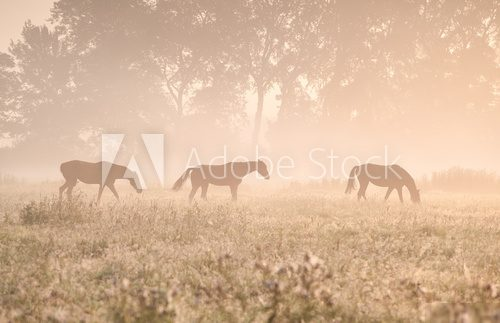 horses in sunshine and fog  Obrazy do Sypialni Obraz
