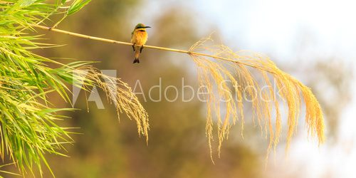 Colorful bee eater sitting on a branch  Zwierzęta Fototapeta