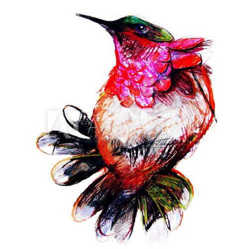 Drawing on paper of colorful paradise bird  Drawn Sketch Fototapeta