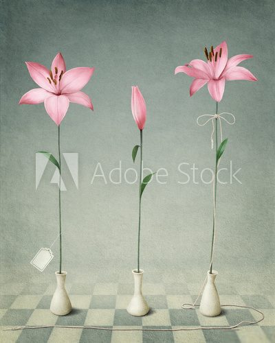 Three pink lily