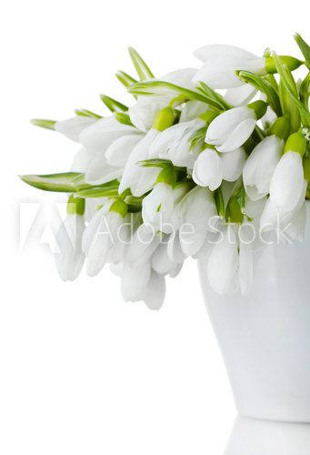 beautiful bouquet of snowdrops in vase isolated on white  Kwiaty Plakat