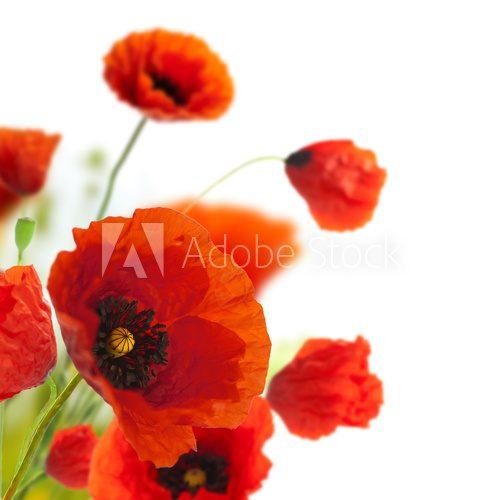 Maki Dekoracyjny Motyw Kwiatowy Fototapety Kwiaty