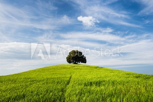 Tree on the top of small green hill with blue sky Krajobraz Fototapeta