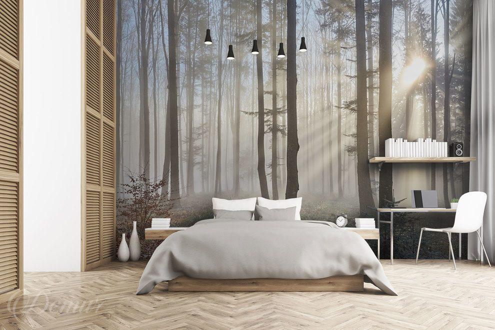 W Ciszy Pośród Leśnych ścian Las Fototapety Demur